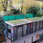 Image of green living roof on top of units on Thorpe Close